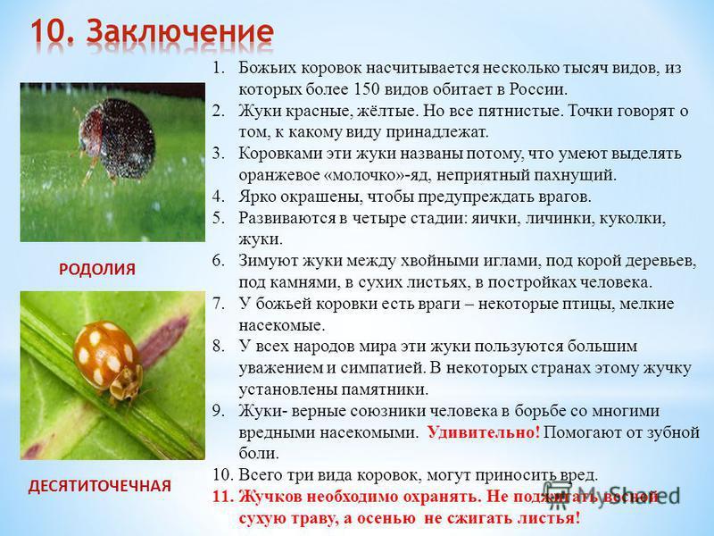 1. Божьих коровок насчитывается несколько тысяч видов, из которых более 150 видов обитает в России. 2. Жуки красные, жёлтые. Но все пятнистые. Точки говорят о том, к какому виду принадлежат. 3. Коровками эти жуки названы потому, что умеют выделять ор