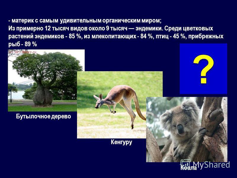 - материк с самым удивительным органическим миром; Из примерно 12 тысяч видов около 9 тысяч эндемики. Среди цветковых растений эндемиков - 85 %, из млекопитающих - 84 %, птиц - 45 %, прибрежных рыб - 89 % Бутылочное дерево Кенгуру Коала