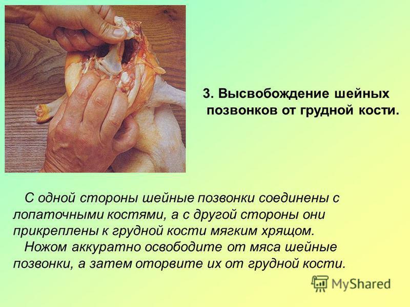 3. Высвобождение шейных позвонков от грудной кости. С одной стороны шейные позвонки соединены с лопаточными костями, а с другой стороны они прикреплены к грудной кости мягким хрящом. Ножом аккуратно освободите от мяса шейные позвонки, а затем оторвит