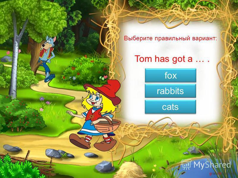 has got is can Выберите правильный вариант: Ann … a cat.