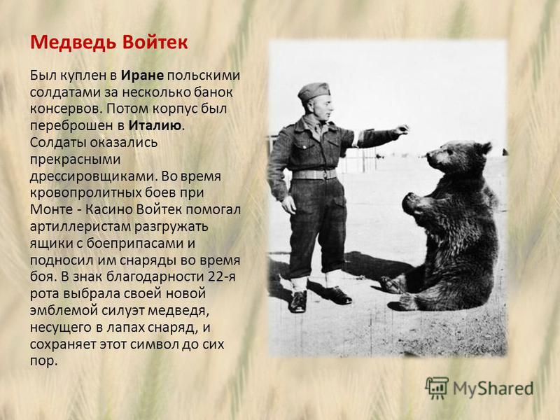 Медведь Войтек Был куплен в Иране польскими солдатами за несколько банок консервов. Потом корпус был переброшен в Италию. Солдаты оказались прекрасными дрессировщиками. Во время кровопролитных боев при Монте - Касино Войтек помогал артиллеристам разг