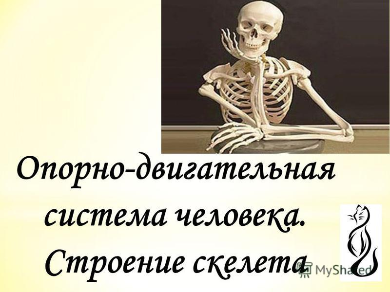 Опорно-двигательная система человека. Строение скелета