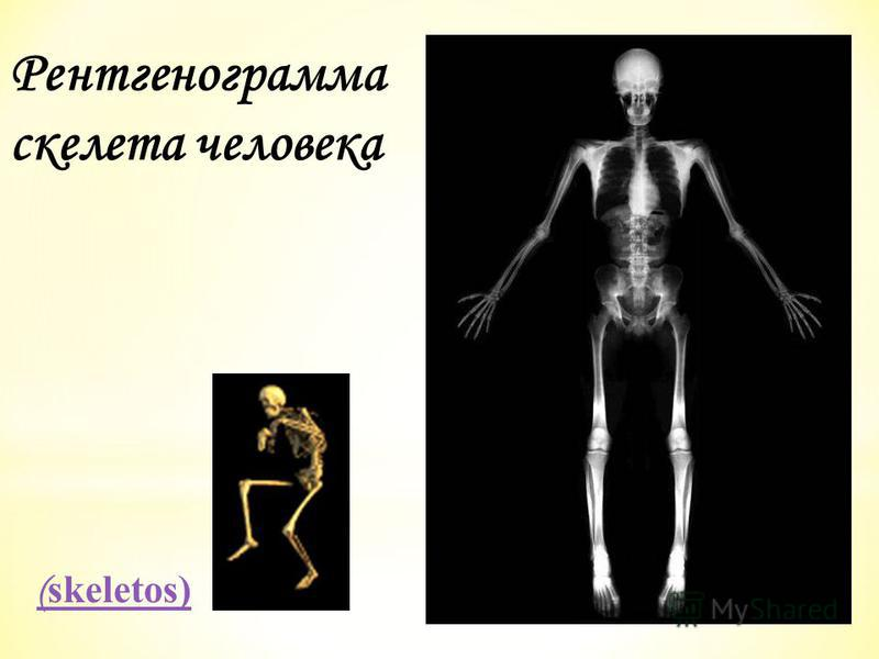 Рентгенограмма скелета человека ( skeletos)