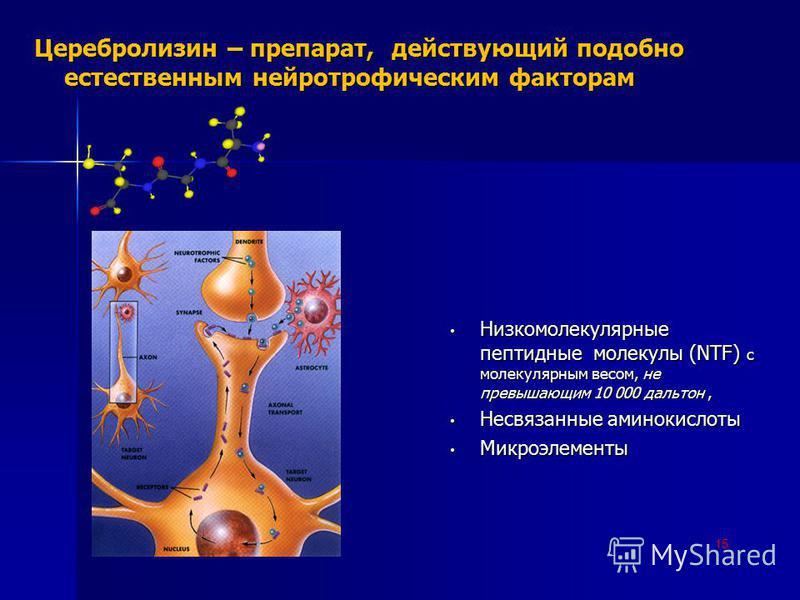 15 Церебролизин – препарат, действующий подобно естественным нейротрофическим факторам Низкомолекулярные пептидные молекулы (NTF) с молекулярным весом, не превышающим 10 000 дальтон, Низкомолекулярные пептидные молекулы (NTF) с молекулярным весом, не