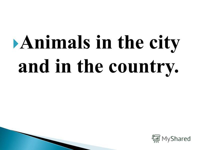 Animals in the city and in the country.