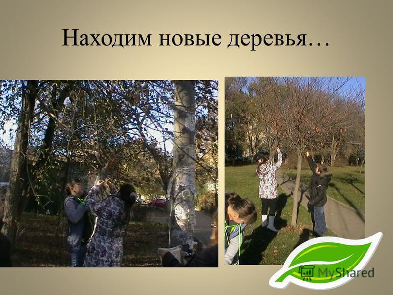 Находим новые деревья…