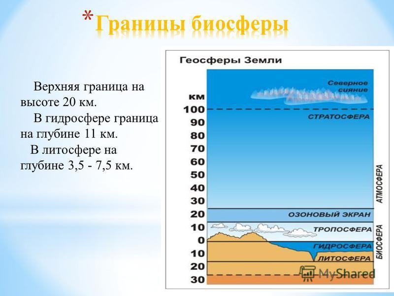 Верхняя граница на высоте 20 км. В гидросфере граница на глубине 11 км. В литосфере на глубине 3,5 - 7,5 км.