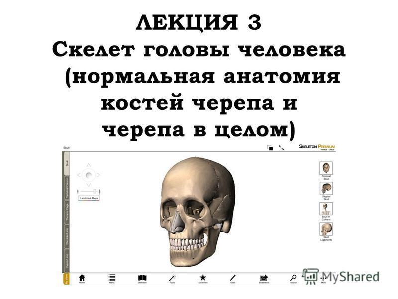 ЛЕКЦИЯ 3 Скелет головы человека (нормальная анатомия костей черепа и черепа в целом)