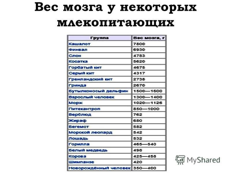 Вес мозга у некоторых млекопитающих