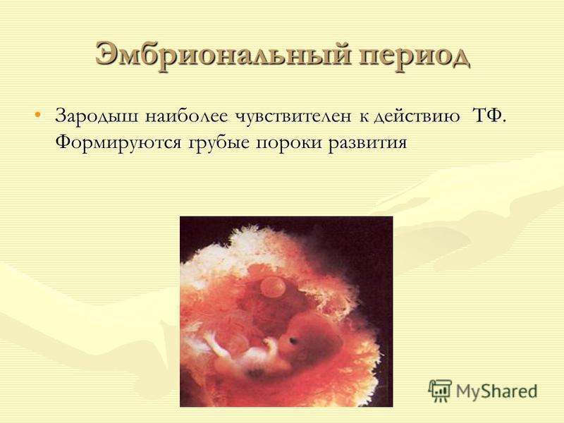 Эмбриональный период Зародыш наиболее чувствителен к действию ТФ. Формируются грубые пороки развития Зародыш наиболее чувствителен к действию ТФ. Формируются грубые пороки развития