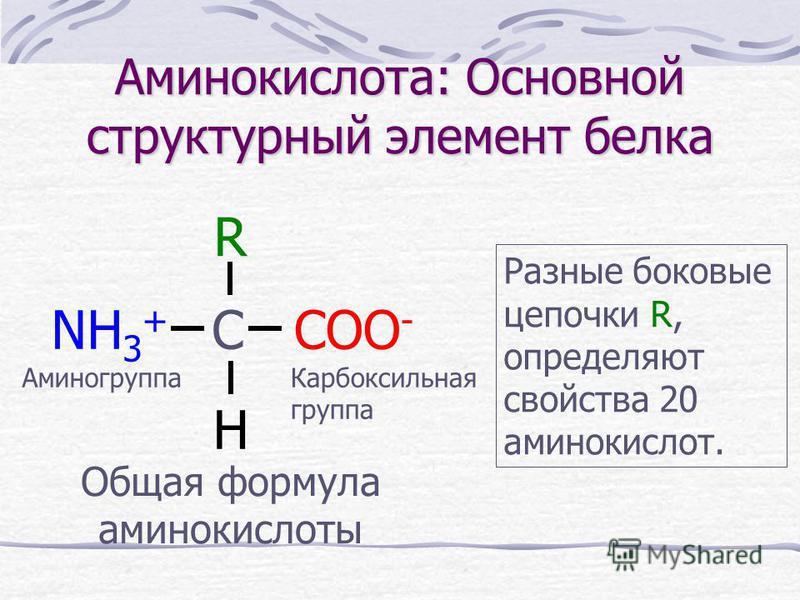 Аминокислота: Основной структурный элемент белка COO - NH 3 + C R H Общая формула аминокислоты Разные боковые цепочки R, определяют свойства 20 аминокислот. Аминогруппа Карбоксильная группа