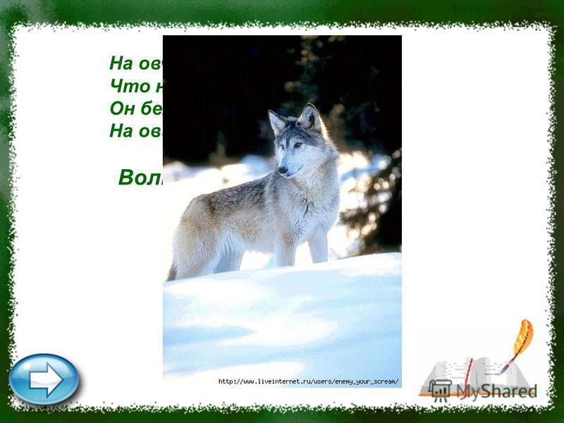 На овчарку он похож, Что ни зуб – то острый нож! Он бежит, оскалив пасть, На овцу готов напасть. Волк