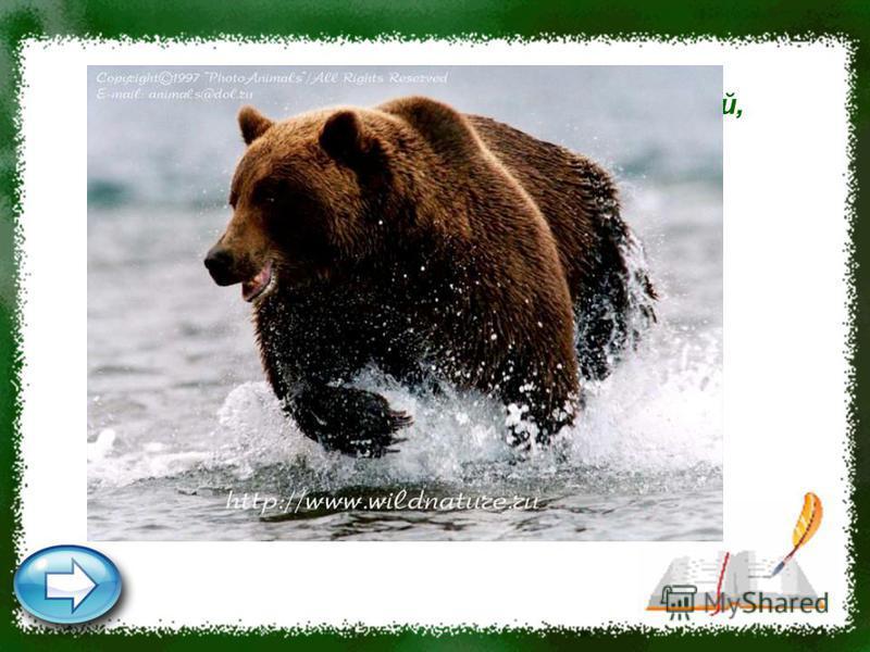 Хозяин лесной просыпается весной, А зимой под вьюжный вой Спит в избушке снеговой. Медведь