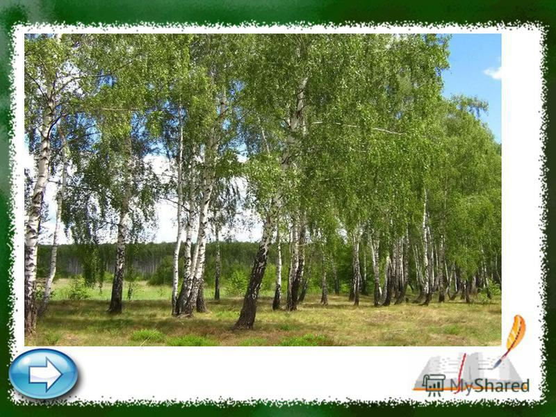 Стоят столбы белые, На них шапки зелёные, Летом мохнатые, Зимой сучковатые. Где они стоят, Там и шумят. Берёзы