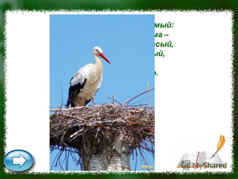 Это старый наш знакомый: Он живёт на крыше дома – Длинноногий, длинноносый, Длинношеий, безголосый, Он летает на охоту За лягушками в болото. Аист