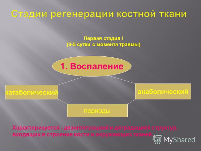 Первая стадия I (0-5 сутки с момента травмы) 1. Воспаление катаболический анаболический периоды Характеризуется - дезинтеграцией и деградацией структур, входящих в строение кости и окружающих тканей.
