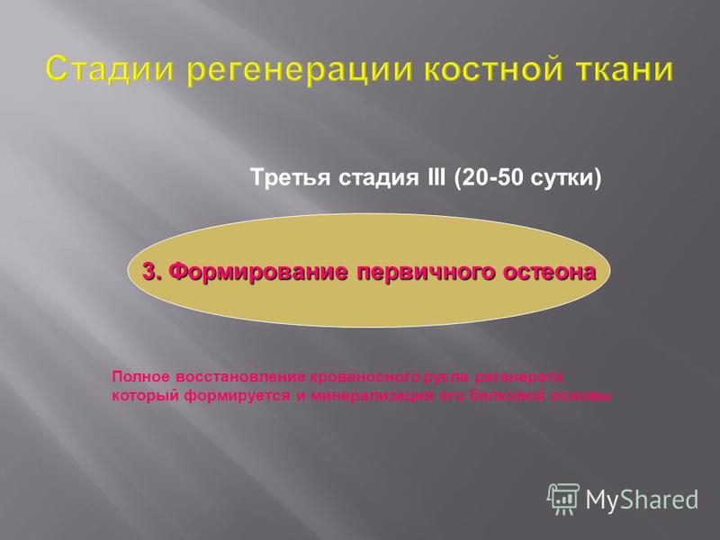 Третья стадия ІІІ (20-50 сутки) 3. Формирование первичного остеона Полное восстановление кровеносного русла регенерата который формируется и минерализация его белковой основы