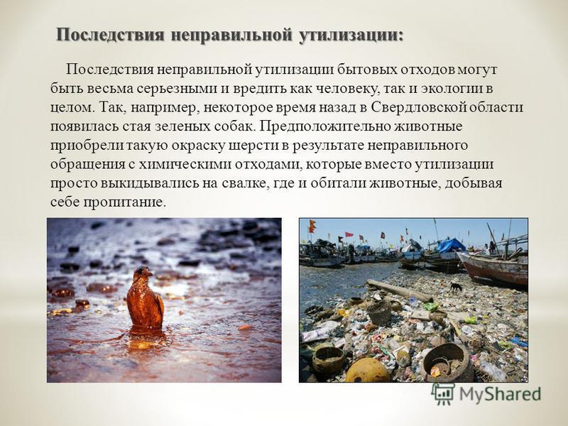 Последствия неправильной утилизации бытовых отходов могут быть весьма серьезными и вредить как человеку, так и экологии в целом. Так, например, некоторое время назад в Свердловской области появилась стая зеленых собак. Предположительно животные приоб