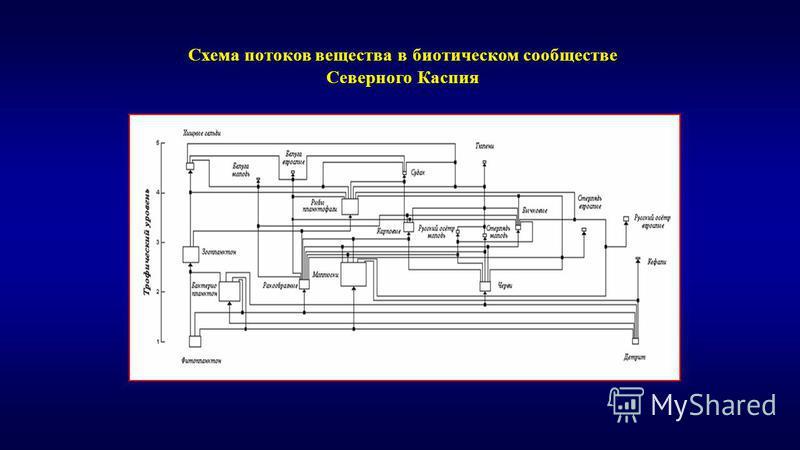 Схема потоков вещества в биотическом сообществе Северного Каспия