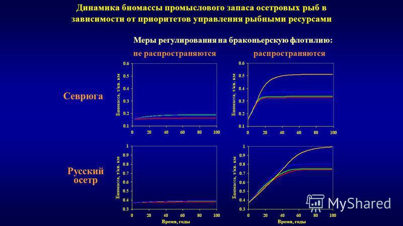 Динамика биомассы промыслового запаса осетровых рыб в зависимости от приоритетов управления рыбными ресурсами Севрюга Русский осетр Время, годы Меры регулирования на браконьерскую флотилию: не распространяются распространяются