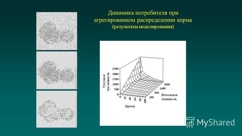 Динамика потребителя при агрегированном распределении корма (результаты моделирования) Изменение численности когорты