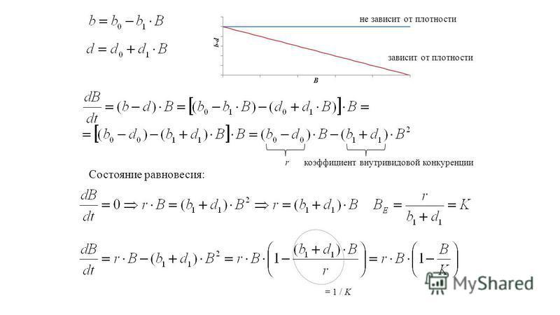 не зависит от плотности зависит от плотности rкоэффициент внутривидовой конкуренции Состояние равновесия: = 1 / K
