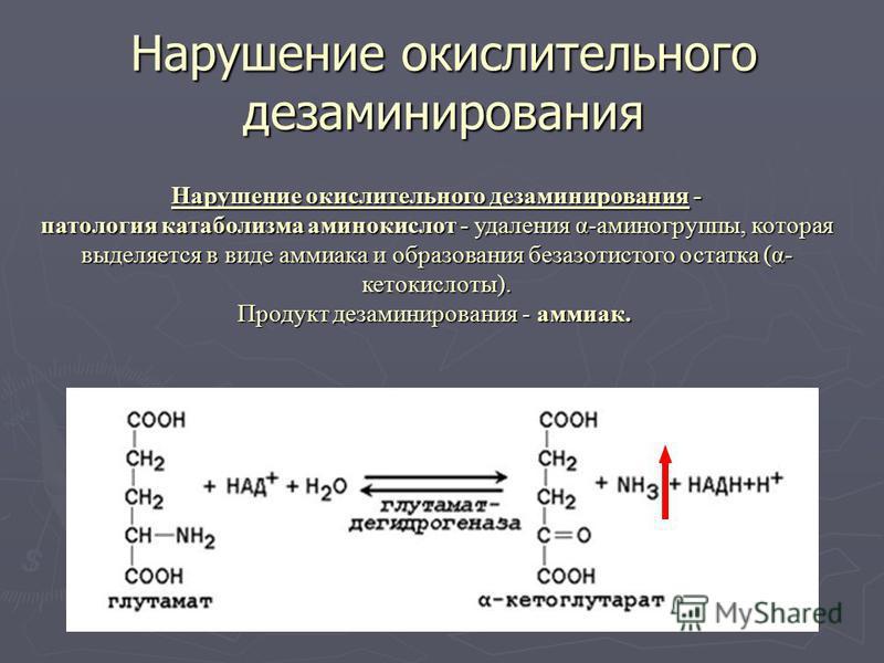 Нарушение окислительного дезаминирования Нарушение окислительного дезаминирования - патология катаболизма аминокислот - удаления α-аминогруппы, которая выделяется в виде аммиака и образования безазотистого остатка (α- кетокислоты). Продукт дезаминиро