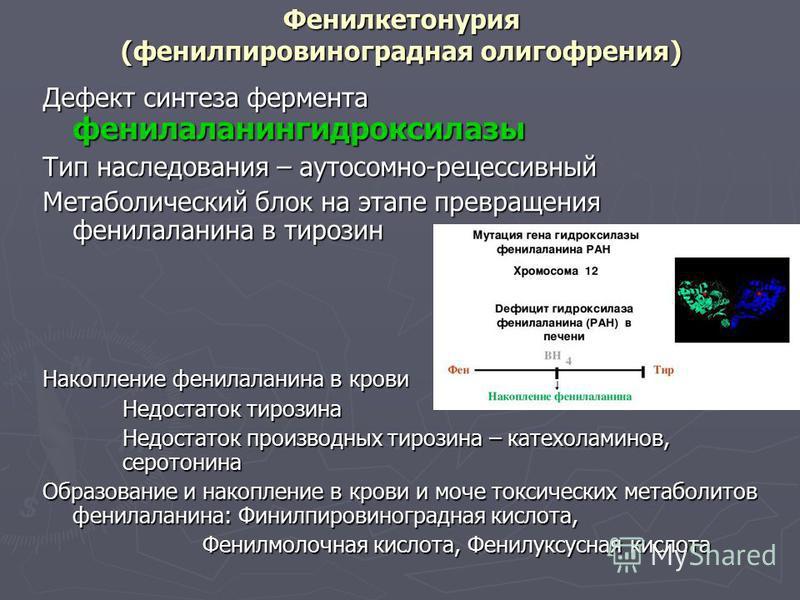 Фенилкетонурия (фенилпировиноградная олигофрения) Дефект синтеза фермента фенилаланингидроксилазы Тип наследования – аутосомно-рецессивный Метаболический блок на этапе превращения фенилаланина в тирозин Накопление фенилаланина в крови Недостаток тиро