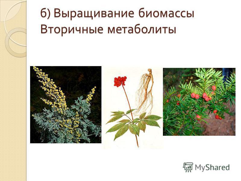 б ) Выращивание биомассы Вторичные метаболиты