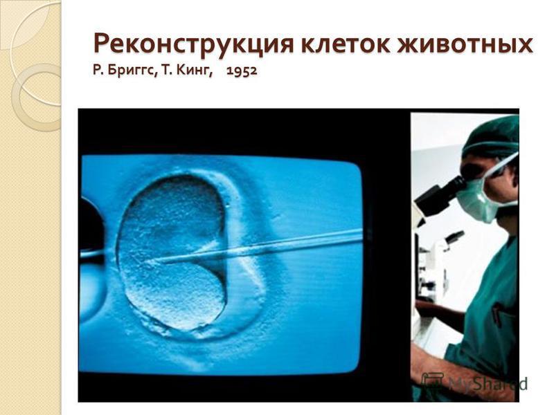Реконструкция клеток животных Р. Бриггс, Т. Кинг, 1952