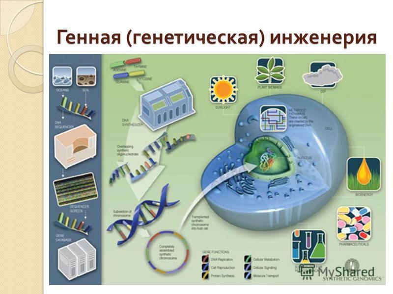 Генная ( генетическая ) инженерия