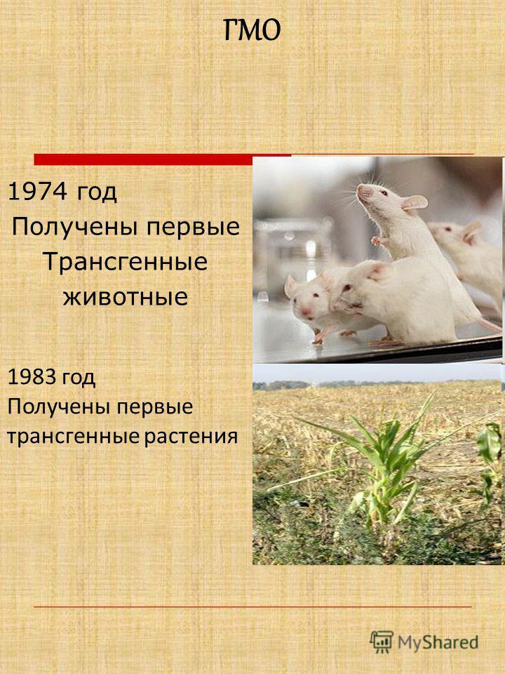 1974 год Получены первые Трансгенные животные ГМО 1983 год Получены первые трансгенные растения