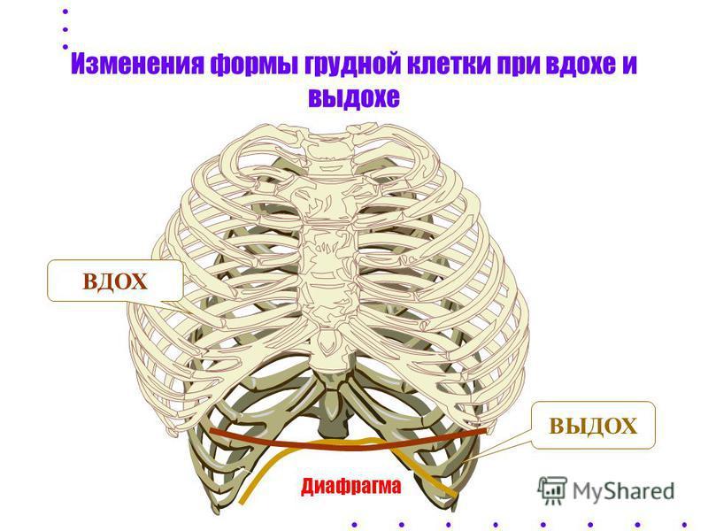 Внешнее дыхание 3 ПРОЦЕССА: - Вентиляция - Диффузия - Перфузия