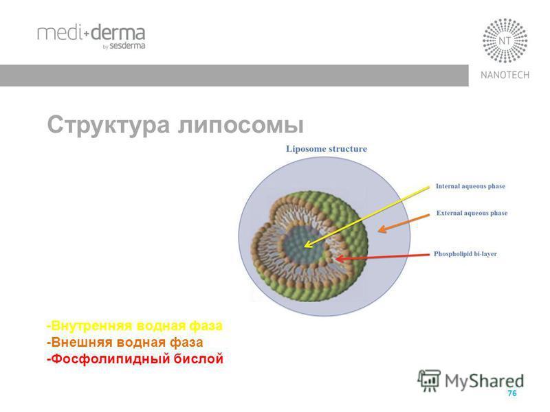 76 Сструктура липосомы структура липосомы -Внутренняя водная фаза -Внешняя водная фаза -Фосфолипидный бислой