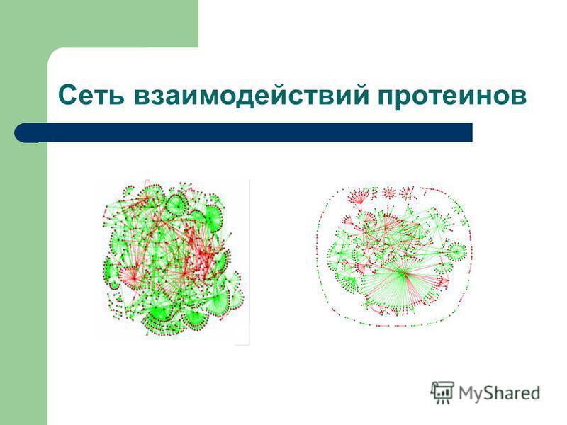 Сеть взаимодействий протеинов
