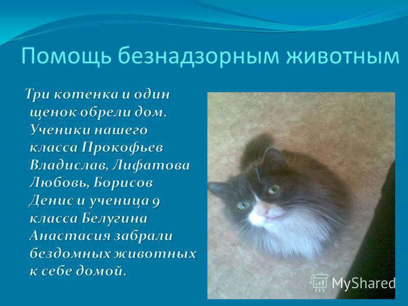 Помощь безнадзорным животным