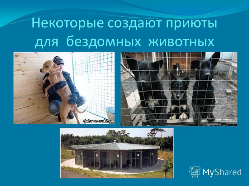 Некоторые создают приюты для бездомных животных