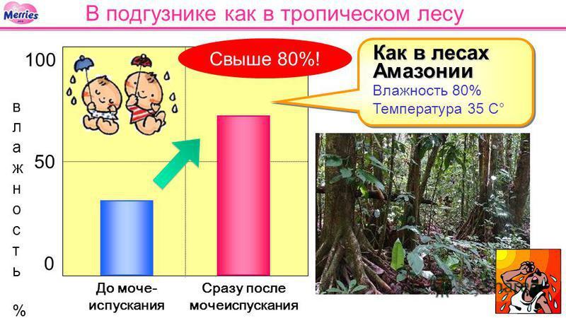 0 50 100 Сразу после мочеиспускания До моче- испускания В подгузнике как в тропическом лесу Как в лесах Амазонии Как в лесах Амазонии Влажность 80% Температура 35 С° Свыше 80%!