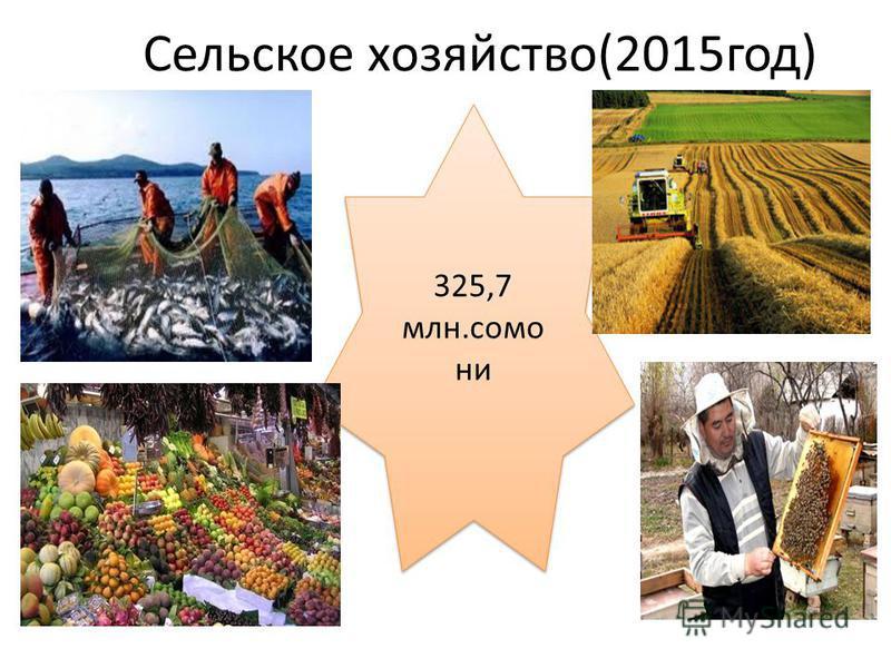 Сельское хозяйство(2015 год) 325,7 млн.само ни