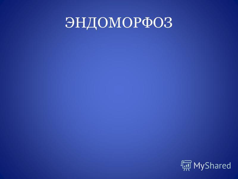 ЭНДОМОРФОЗ