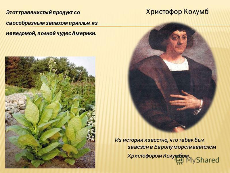 Этот травянистый продукт со своеобразным запахом приплыл из неведомой, полной чудес Америки. Христофор Колумб Из истории известно, что табак был завезен в Европу мореплавателем Христофором Колумбом.