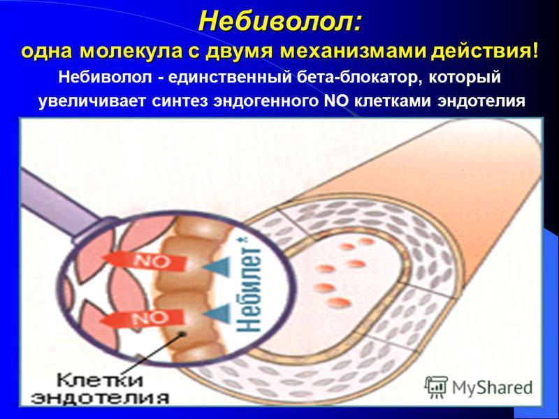 Небиволол: одна молекула с двумя механизмами действия! Небиволол - единственный бета-блокатор, который увеличивает синтез эндогенного NO клетками эндотелия