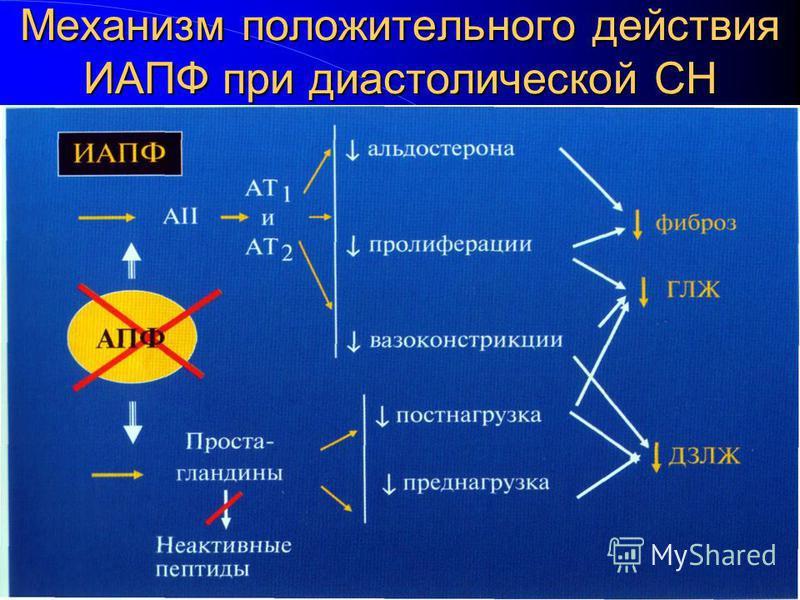 Механизм положительного действия ИАПФ при диастолической СН