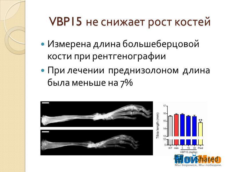 VBP15 не снижает рост костей Измерена длина большеберцовой кости при рентгенографии При лечении преднизолоном длина была меньше на 7%