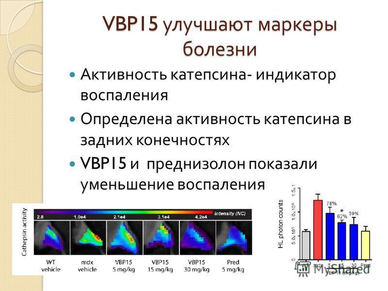 VBP15 улучшают маркеры болезни Активность катепсина - индикатор воспаления Определена активность катепсина в задних конечностях VBP15 и преднизолон показали уменьшение воспаления