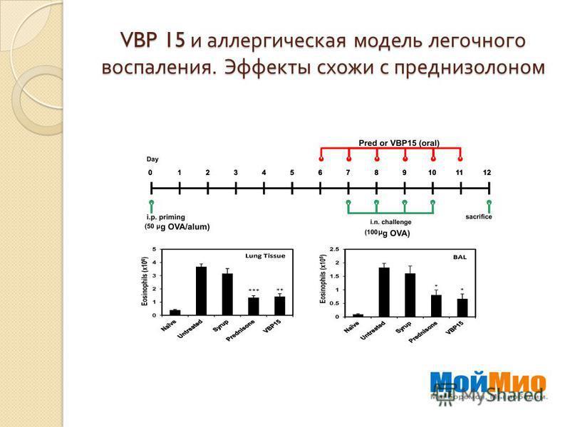 VBP 15 и аллергическая модель легочного воспаления. Эффекты схожи с преднизолоном