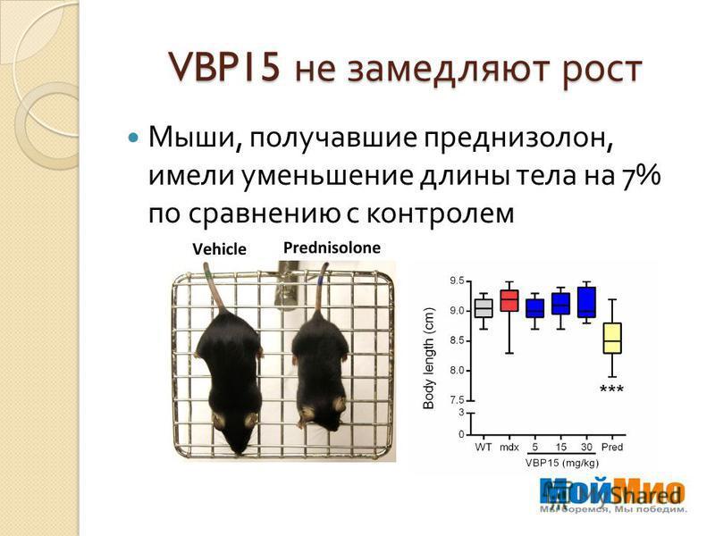 VBP15 не замедляют рост Мыши, получавшие преднизолон, имели уменьшение длины тела на 7% по сравнению с контролем