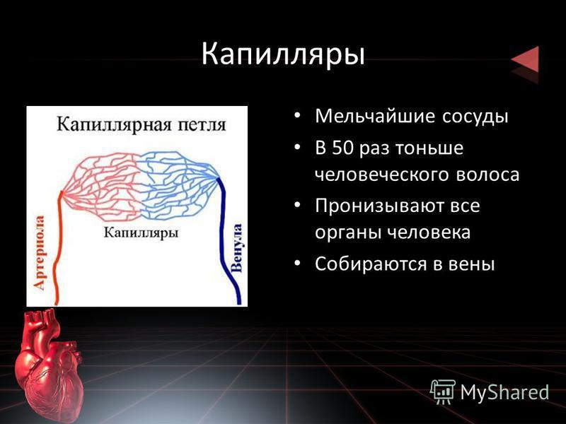 Капилляры Мельчайшие сосуды В 50 раз тоньше человеческого волоса Пронизывают все органы человека Собираются в вены
