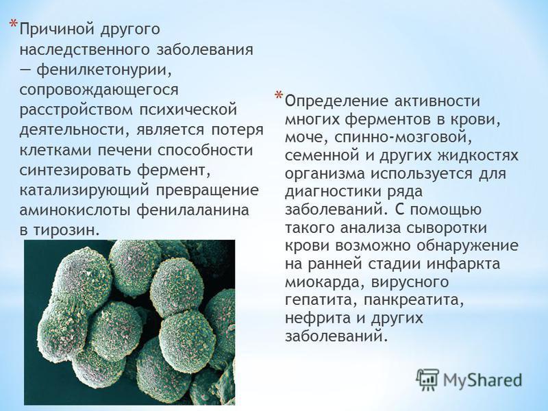 * Причиной другого наследственного заболевания фенилкетонурии, сопровождающегося расстройством психической деятельности, является потеря клетками печени способности синтезировать фермент, катализирующий превращение аминокислоты фенилаланина в тирозин