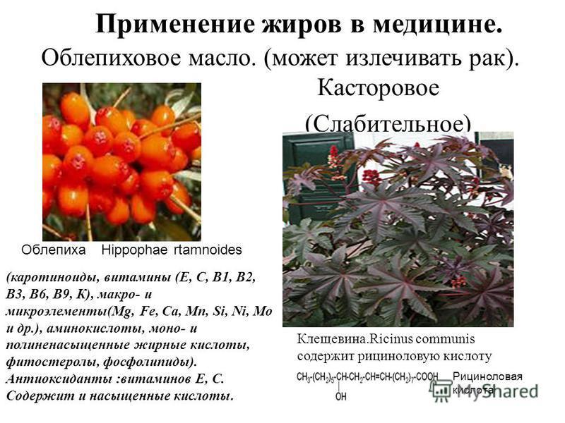Применение жиров в медицине. Облепиховое масло. (может излечивать рак). Касторовое (Слабительное) Клещевина.Ricinus communis содержит рицинолевую кислоту ОблепихаHippophae rtamnoides Рициноловая кислота (каротиноиды, витамины (Е, С, В1, В2, B3, В6, B